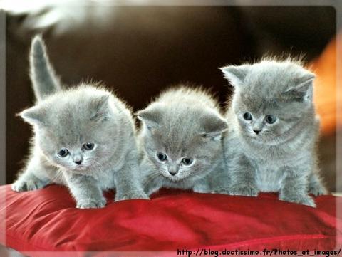 Chaton - Enlever les puces sur un chaton ...
